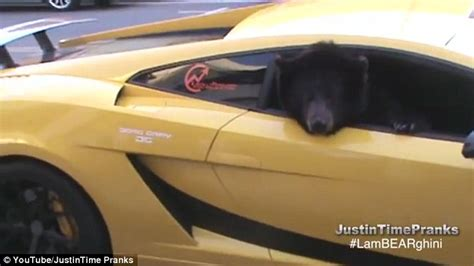 Beary Funny! Pranksters Stop Traffic In L.a. With Yogi The