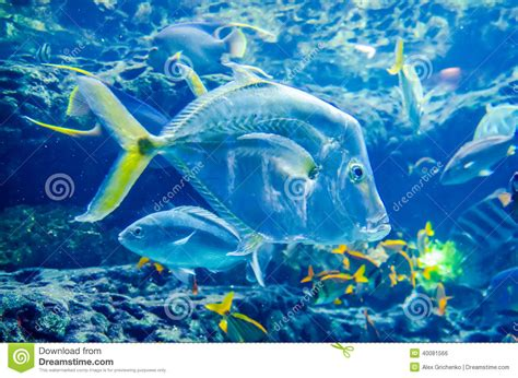 salt water fish in the stock photo image 40081566