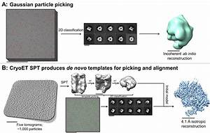 Process Analysis Routine Single Particle Cryoem Sample And Grid