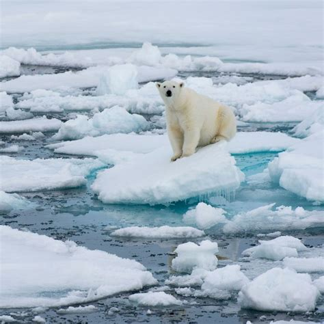 north pole  basically hot