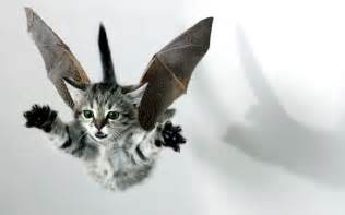 flying with a cat flying cat by serenitysteve on deviantart