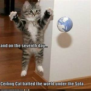 Funny Image Gallery: Lol Cats Captions funny pictures ...