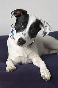 Dog Black And White Breed