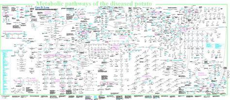 metabolic pathways of the diseased potato jpg 960 419