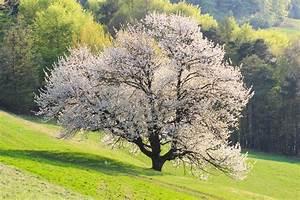 Baum Mit H : bl hender baum foto bild pflanzen pilze flechten b ume natur landschaften bilder auf ~ A.2002-acura-tl-radio.info Haus und Dekorationen