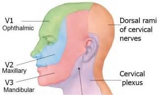 Dermatomes Head