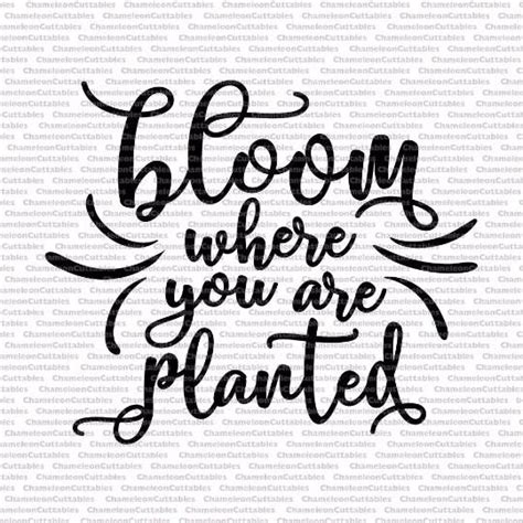 It's totally unique, and you won't find another like it, because it doesn't use fonts available for purchase. bloom where you are planted, quote, garden, flowers, svg ...