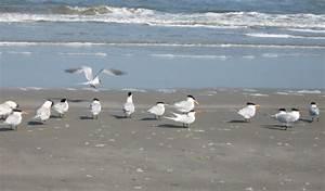 Animals - Cumberland Island National Seashore (U.S ...