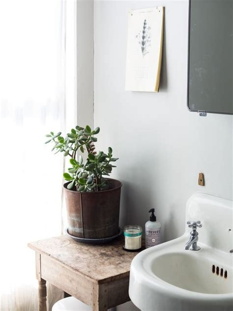 Plants In Bathroom Images by 6 Houseplants That Will Survive Your Busy Schedule The