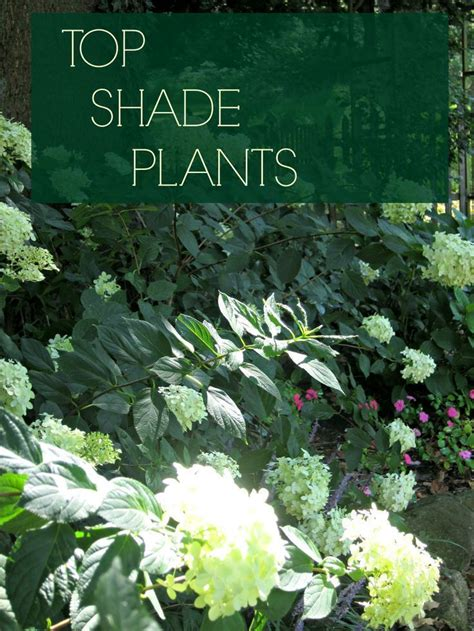 best plants for shade discover top shade perennials gardens colors and tops