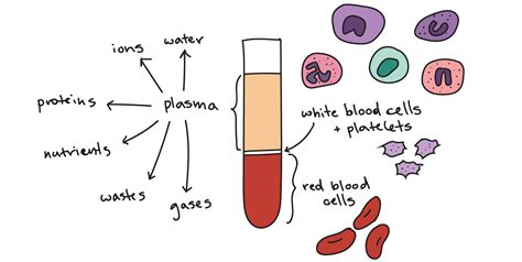 which blood component gives blood its color blood components definition functions