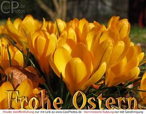 Frohe Ostern Bilder Kostenlos Herunterladen : osterkarten frohe ostern ~ Frokenaadalensverden.com Haus und Dekorationen
