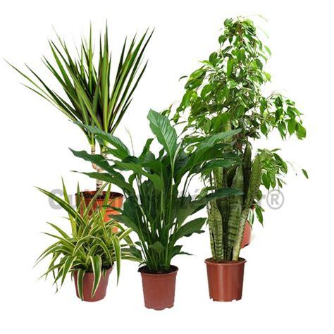 plante depolluante d interieur les plantes d 233 polluantes d int 233 rieur
