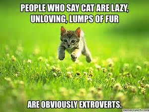 cat lover meme cat be like