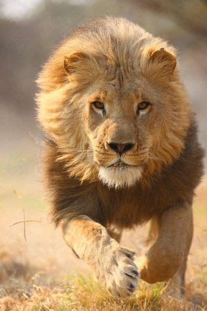 animales salvajes caracteristicas fotos  documentales