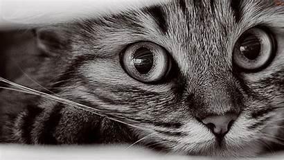 Cat Close Penguin Wallpapers Looking