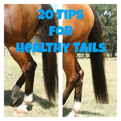 20 Tips For Healthy Horse Tails  Cowboy Magic