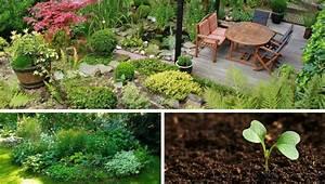 Pflegeleichter Garten Ohne Rasen : garten pflanzen praktische tipps wertvolle hinweise gute ideen ~ Markanthonyermac.com Haus und Dekorationen