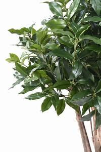 Plante D Intérieur : plante artificielle laurier lusitanica plante d ~ Dode.kayakingforconservation.com Idées de Décoration