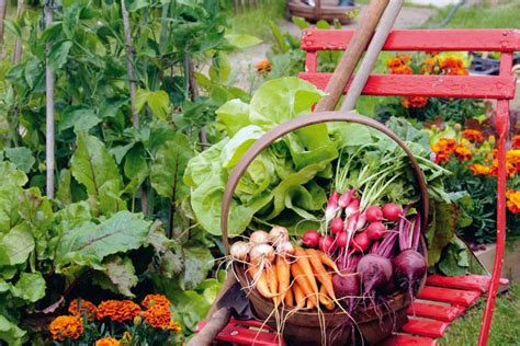 Der Biogarten Für Einsteiger Gartentechnikde