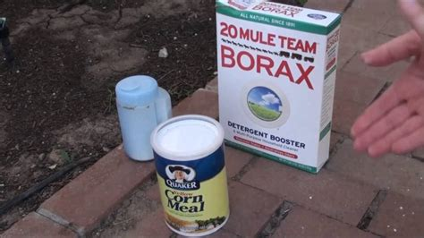 borax ant killer   kill ants  borax natural