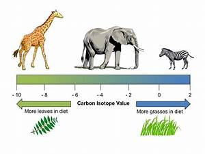 The Diets Of Fossilized Herbivores