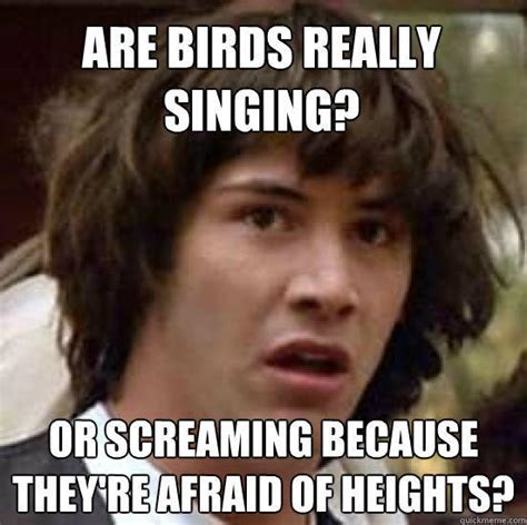 Afraid Meme - are birds really singing or screaming because they re afraid of heights conspiracy keanu