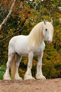 achtsamkeit sprüche 1000 ideen zu pferde auf palomino fohlen und schwarze pferde