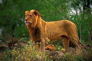 Amazing Wildlife Photography - Suha Derbent (18 photos ...