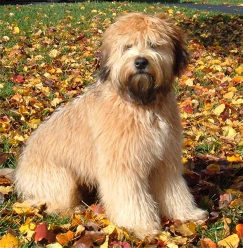 breeds for busy families pets world