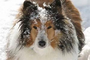 Que Donner A Manger A Un Ecureuil Sauvage : comment capturer un chien sauvage ou craintif ~ Dallasstarsshop.com Idées de Décoration