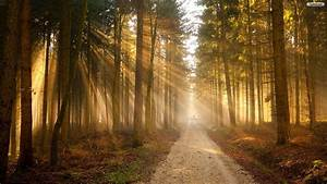 Sunny, Forest, Road, Wallpaper