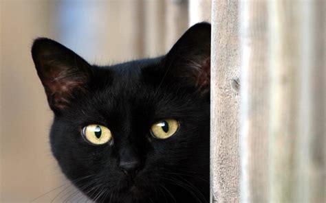 Bienvenue sur, chat fr, chat en ligne sans inscription gratuit