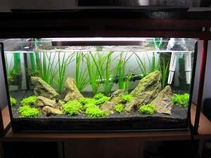 Aquarium Einrichten 60l : 54 liter shintoquarium aquarium forum ~ Michelbontemps.com Haus und Dekorationen