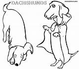 Dachshund Coloring Pages Printable Dog Bichon Frise Wiener Colorings Dogs Coloringway Getcolorings Puppy Rescue Getdrawings sketch template