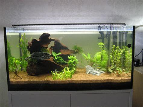 mise en eau aquarium photos d aquarium page 217