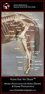 Horse Side Vet Guide - Quick Reference