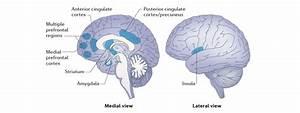 Mindfulness  U2014 A Very Short Guide - Dr Arif Akhtar