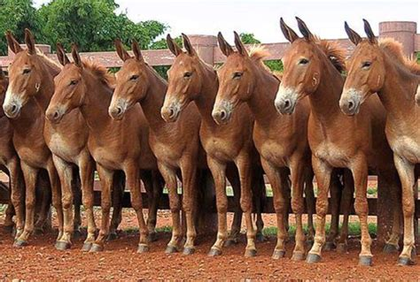 horses intelligent horse animals most looking farm there visit pretty