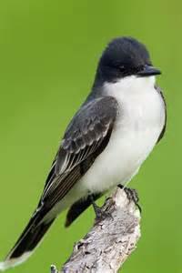Eastern North American Birds
