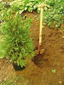 tannenbaum pflanzen saisonales selbstde With garten planen mit tannenbaum balkon
