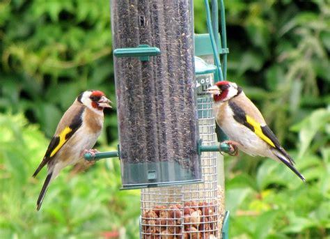 top   bird feeders design