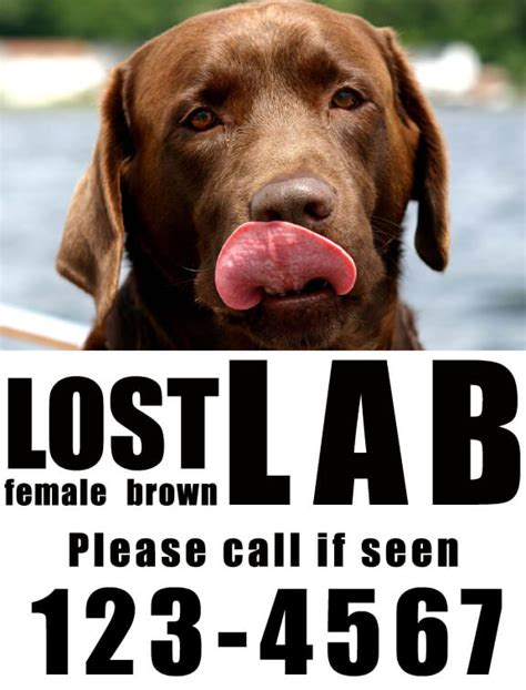 tips    great missing pet poster dream