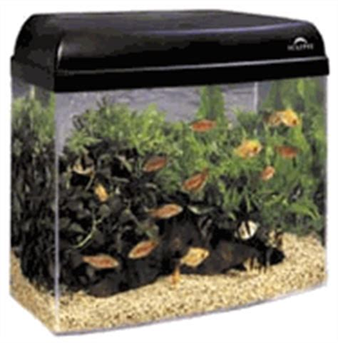 that pet place fish supplies