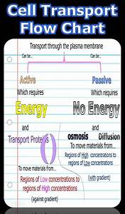 96 Best Images About Diffusion Osmosis On Pinterest