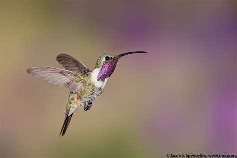 top 28 when do hummingbirds leave baby hummingbirds