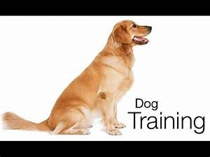 petsmart dog training trial cost only 1 youtube With dog training cost