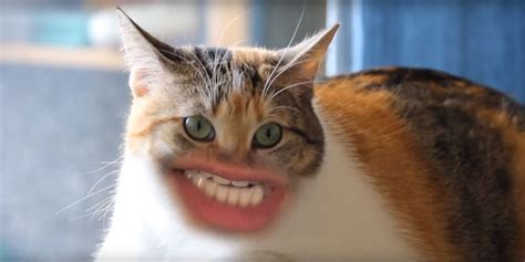 Cats With Human Mouths  Huffpost Uk
