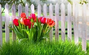 Alternative Zu Gras Garten : fr hlingsblumen rote tulpen garten gras 2560x1600 hd hintergrundbilder hd bild ~ Markanthonyermac.com Haus und Dekorationen
