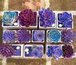 wedding favor ideas creative indoor and outdoor succulent garden ideas 2017